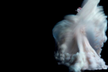 Nick KNIGHT (*1958, Great Britain): Ming Xi wearing Chanel Haute Couture – Christophe Guye Galerie